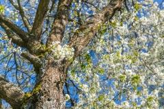 Grafschafter Frühling 34