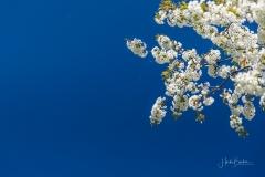 Grafschafter Frühling 36