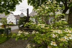 Grafschaft-Fruehjahr2019-05