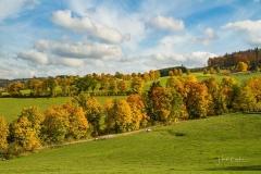 Grafschaft-Herbst-007
