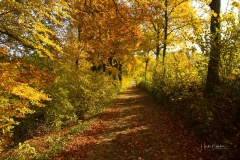 Grafschaft-Herbst-010