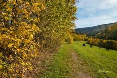 Grafschaft-Herbst-013