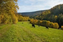 Grafschaft-Herbst-014