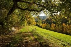 Grafschaft-Herbst-015