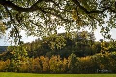 Grafschaft-Herbst-016