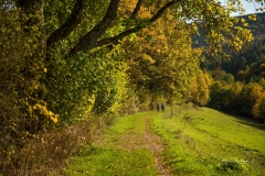 Grafschaft-Herbst-017