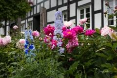 Grafschaft_Sommer_2021_40