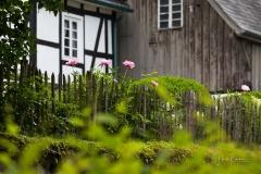 Grafschaft_Sommer_2021_46