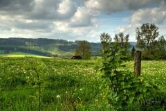 Grafschafter Fruehling (1 von 1)