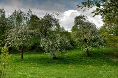 Grafschafter Fruehling (7 von 1)