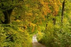 Grafschafter-Herbst-01