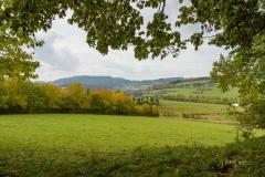 Grafschafter-Herbst-18