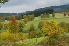 Grafschafter-Herbst-22