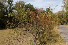 Sauerland-Herbst-35