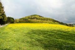 Wilzenberg-im-Frühjahr-2