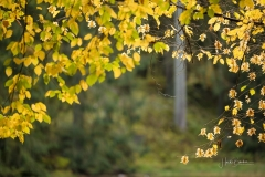 Grafschafter-Muehlenteich-im-Herbst-5