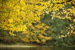 Grafschafter-Muehlenteich-im-Herbst-6