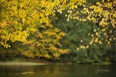 Grafschafter-Muehlenteich-im-Herbst-7