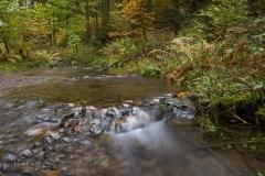 Hartmecke-im-Herbst-11
