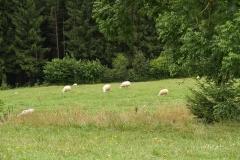 Hebbecke-Rotbusch-19