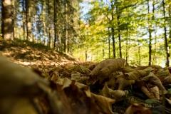 Hennesee-Herbst-031