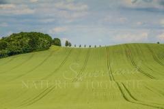 Felder und Wiesen rund um den Hennesee 1