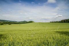 Felder und Wiesen rund um den Hennesee 2