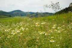 Felder und Wiesen rund um den Hennesee 4