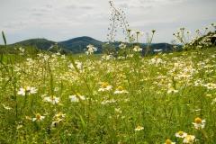 Felder und Wiesen rund um den Hennesee 5