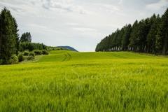 Felder und Wiesen rund um den Hennesee 7