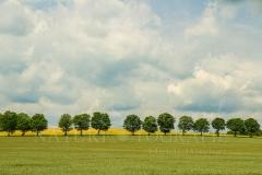 Felder und Wiesen rund um den Hennesee 8