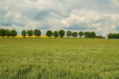 Felder und Wiesen rund um den Hennesee 9