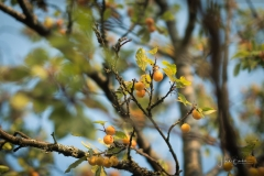 Herbstfruechte-004