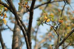 Herbstfruechte-005