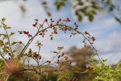 Herbstfruechte-009