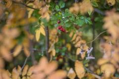 Herbstfruechte-013