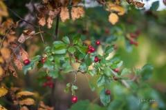 Herbstfruechte-014