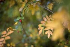 Herbstfruechte-015