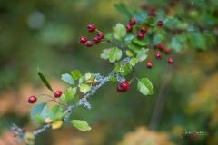Herbstfruechte-016