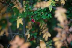 Herbstfruechte-017