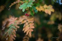 Herbstfruechte-018