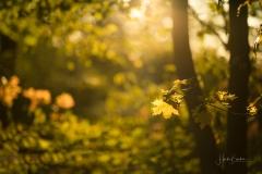Goldene Stunde im Herbstwald 1