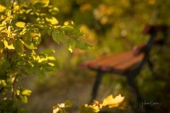 Goldene Stunde im Herbstwald 7