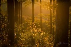 Goldene Stunde im Herbstwald 2
