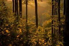 Goldene Stunde im Herbstwald 4