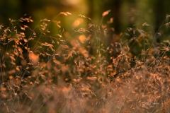 Goldene Stunde im Herbstwald 6