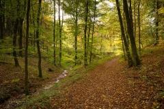 Herbstwald am Hennesee 1