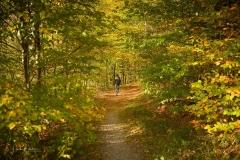 Herbstwald am Hennesee 2