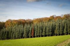 Herbstwald am Hennesee 3