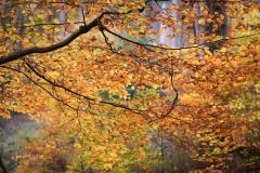 Herbst-Impressionen_055
